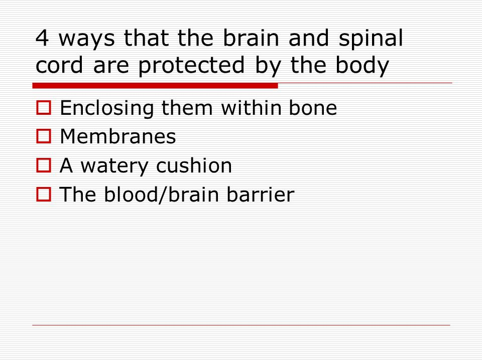 4 ways that the brain and spinal cord are protected by the body  Enclosing them within bone  Membranes  A watery cushion  The blood/brain barrier