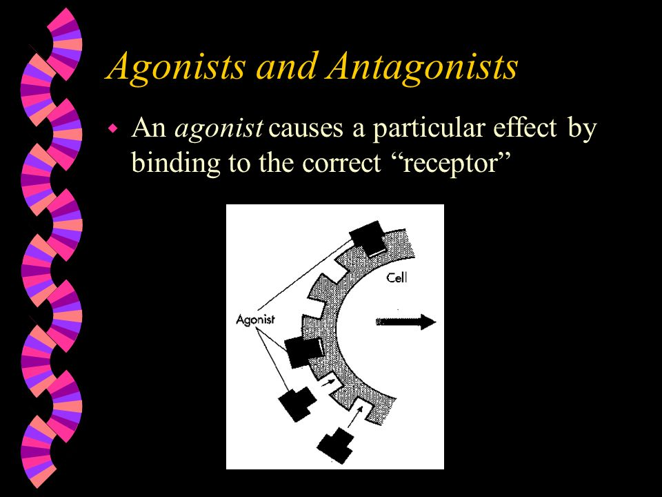Agonists and Antagonists w An agonist causes a particular effect by binding to the correct receptor