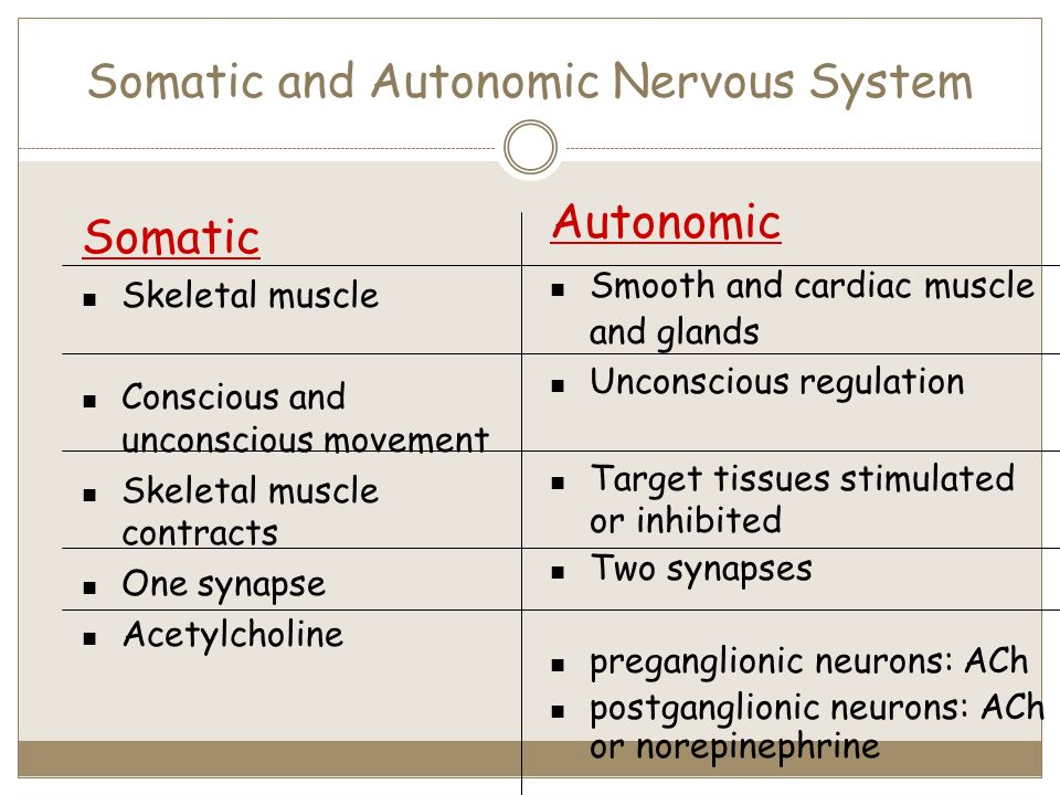 difference between somatic and autonomic