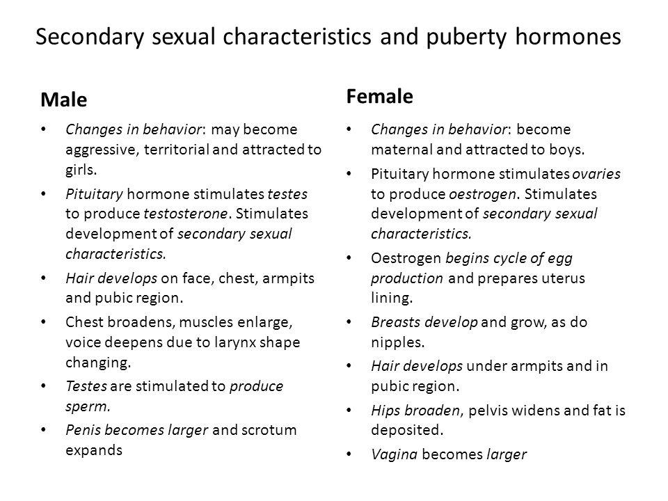 Secondary sex characteristics of males porn last