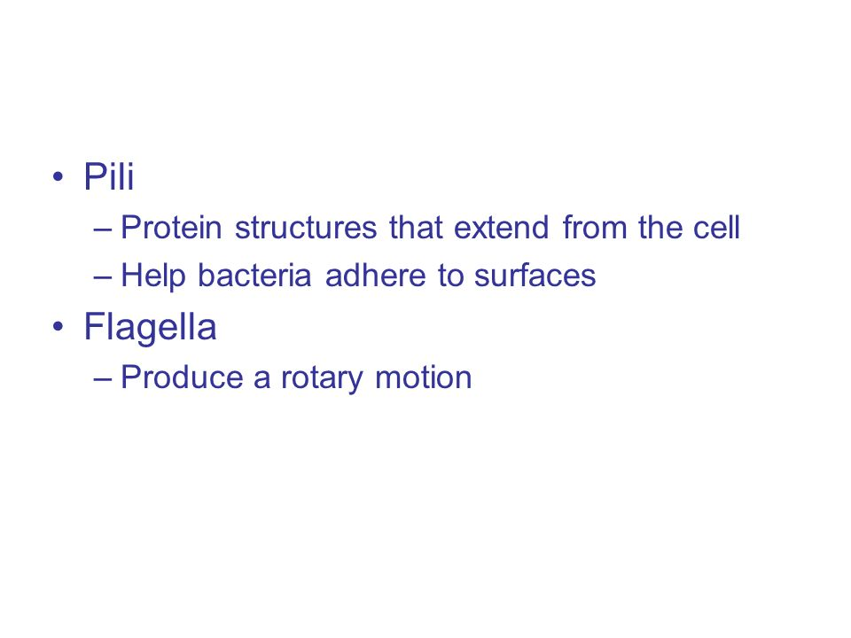 Pili –Protein structures that extend from the cell –Help bacteria adhere to surfaces Flagella –Produce a rotary motion