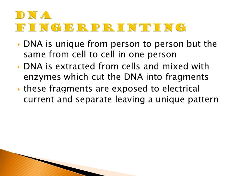  DNA is unique from person to person but the same from cell to cell in one person  DNA is extracted from cells and mixed with enzymes which cut the DNA into fragments  these fragments are exposed to electrical current and separate leaving a unique pattern