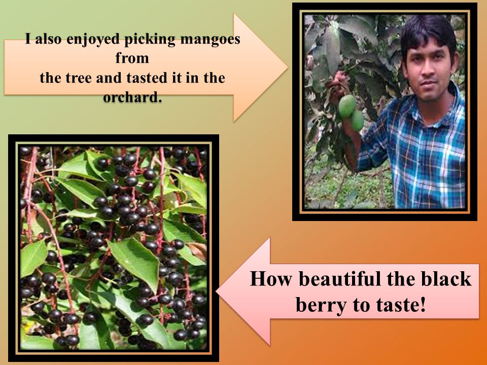 I also enjoyed picking mangoes from the tree and tasted it in the orchard.
