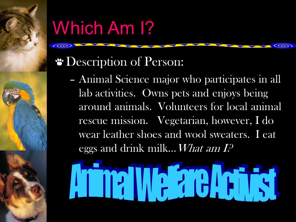 animal rights versus animal welfare National animal interest alliance - the mission of naia is to promote the welfare of animals, animal rights, to strengthen the human-animal bond, and safeguard the rights of responsible animal owners.