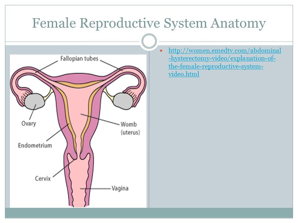 BY: KIMBERLY GLIDEWELL, BEN CLAYTON, AND JACOB FRANKA Reproductive ...