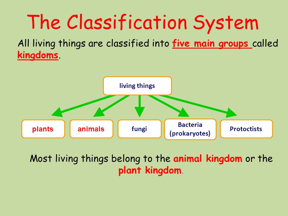 Printable Worksheets five kingdoms of living things worksheets : Classification. Lesson Objective To understand how organisms are ...