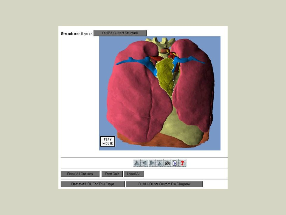 Veterinary Medical Informatics VMRCVM Conduits Between Anatomical ...