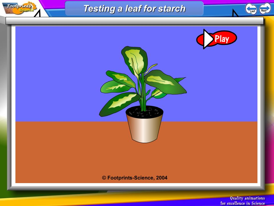 Testing a leaf for starch