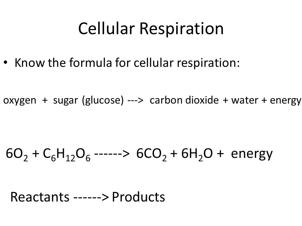 Cellular Respiration Know the formula for cellular respiration: oxygen + sugar (glucose) ---> carbon dioxide + water + energy 6O 2 + C 6 H 12 O > 6CO 2 + 6H 2 O + energy Reactants > Products