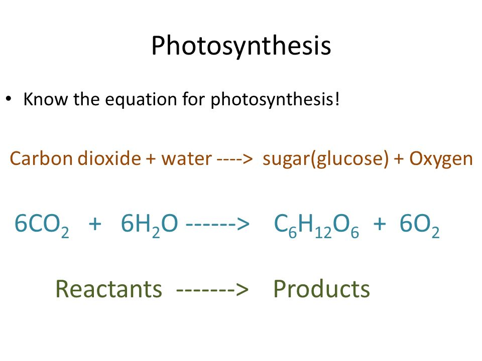 Photosynthesis Know the equation for photosynthesis.