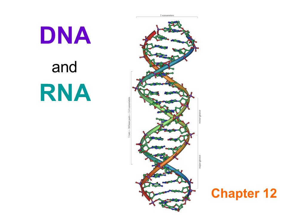 NUCLEIC ACIDS DNA AND RNA PDF DOWNLOAD