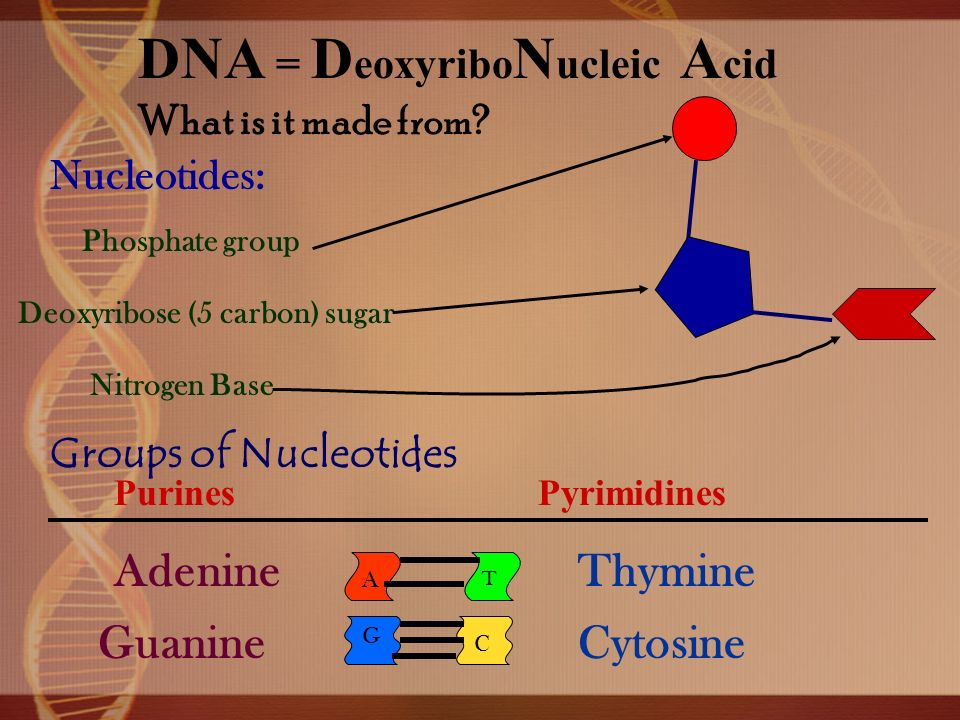 DNA and RNA Questions 1.What do the letters DNA stand for? 2.What