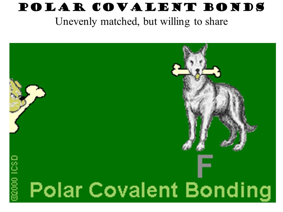 Electrons are shared but shared unequally POLAR COVALENT BONDS H2OH2O