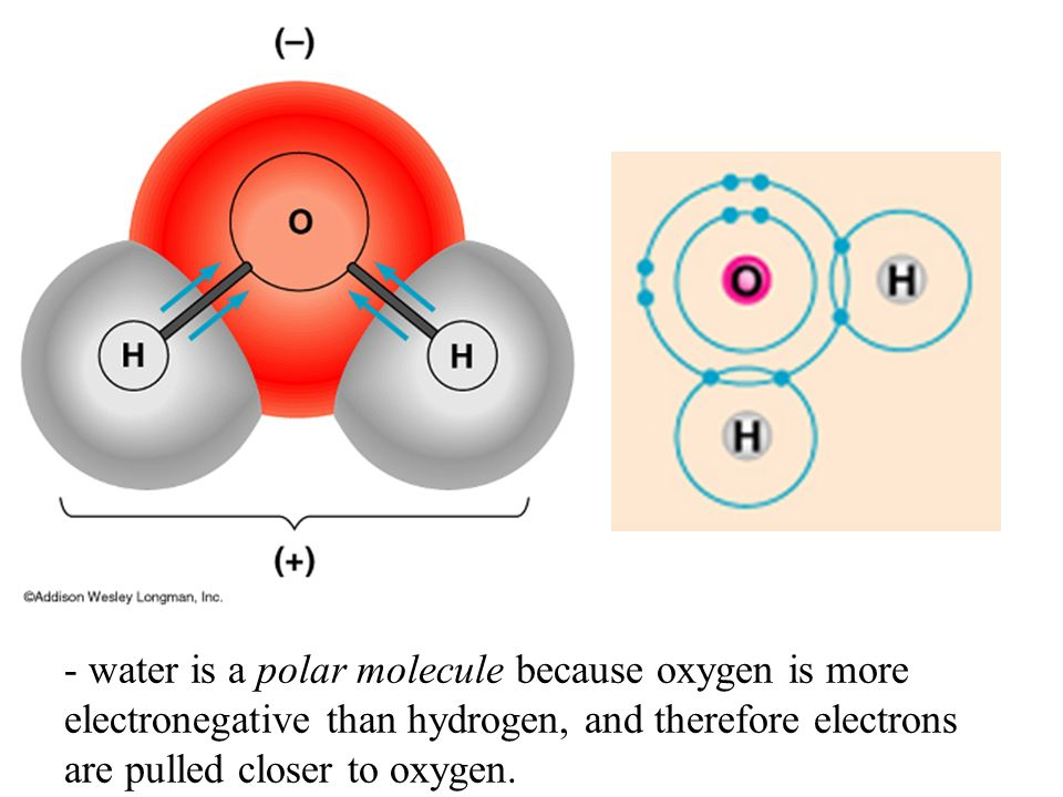 Polar Covalent Bonds Unevenly matched, but willing to share