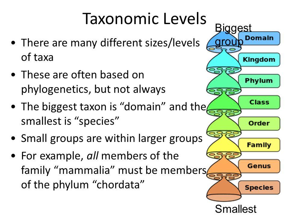 smallest taxonomic category