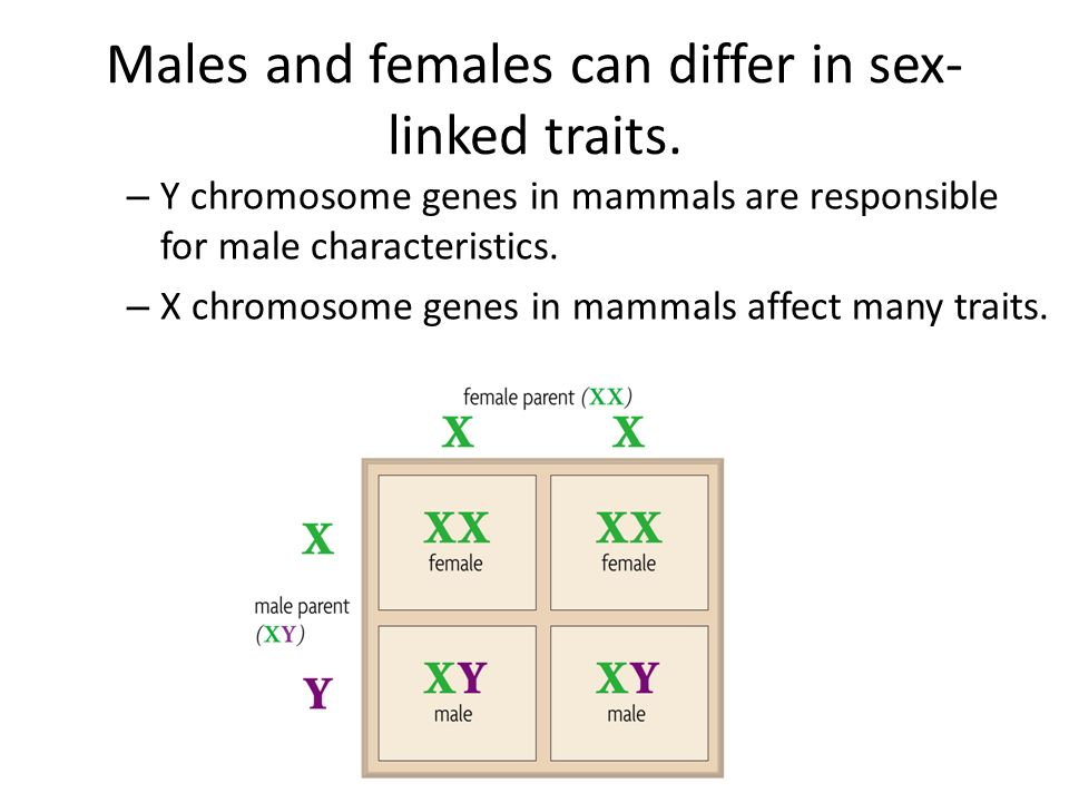 How do autosomes differ from sex chromosomes pic 71