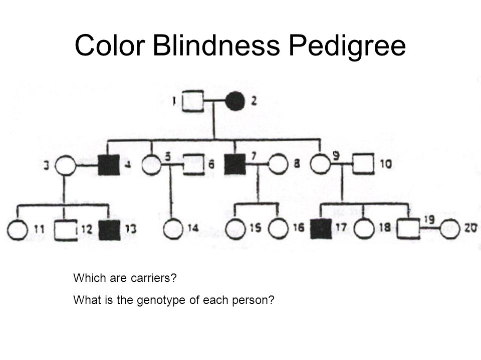 Pedigrees Pedigrees Help Us To Track Certain Traits In Our Family