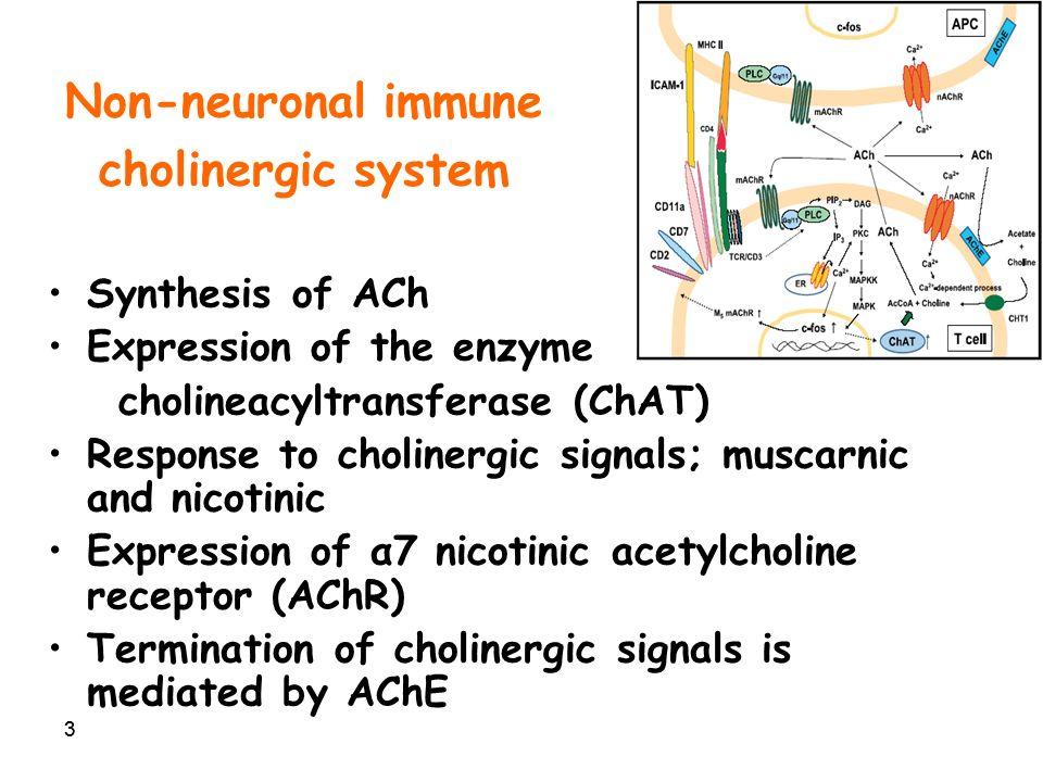 1 Cholinergic anti-inflammatory signaling through α7 nAChR Talma