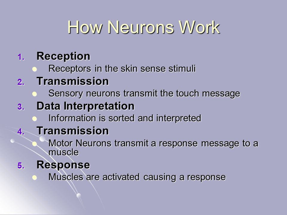 How Neurons Work 1.