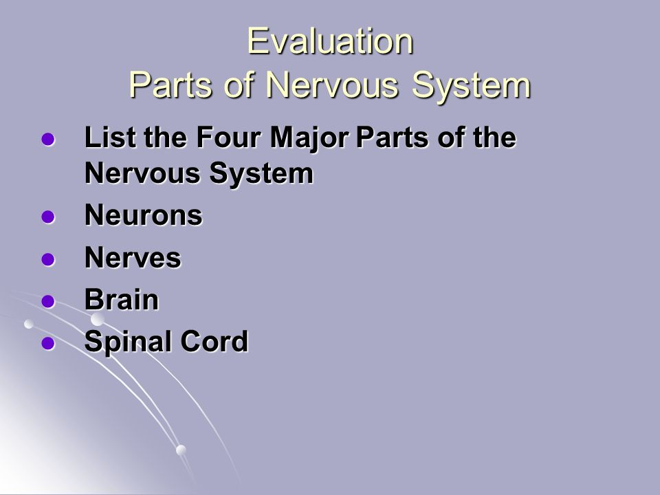Evaluation Parts of Nervous System List the Four Major Parts of the Nervous System List the Four Major Parts of the Nervous System Neurons Neurons Nerves Nerves Brain Brain Spinal Cord Spinal Cord