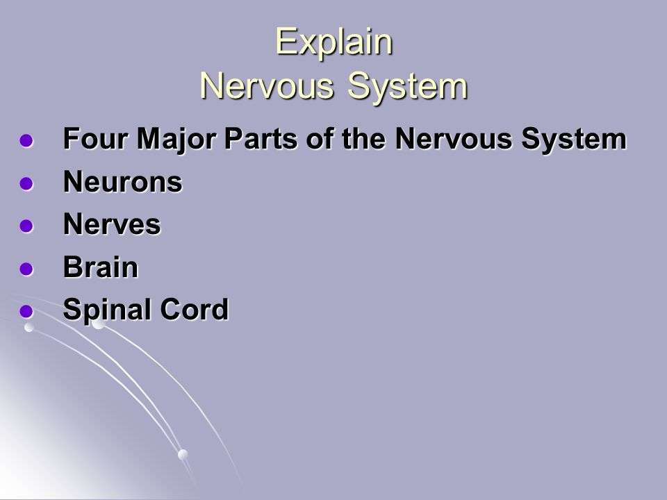 Explain Nervous System Four Major Parts of the Nervous System Four Major Parts of the Nervous System Neurons Neurons Nerves Nerves Brain Brain Spinal Cord Spinal Cord
