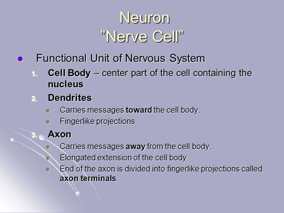 Neuron Nerve Cell Neuron Nerve Cell Functional Unit of Nervous System Functional Unit of Nervous System 1.