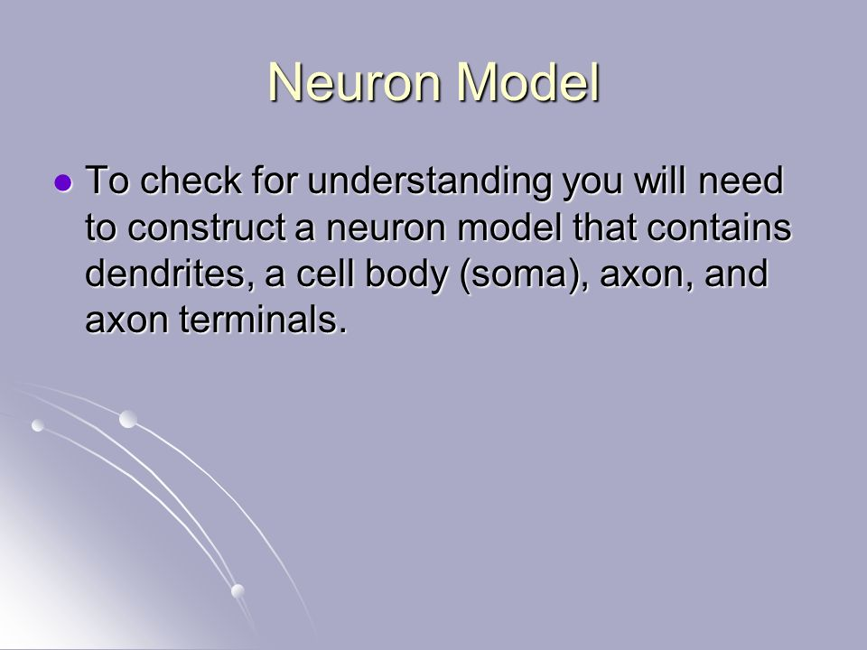 Neuron Model To check for understanding you will need to construct a neuron model that contains dendrites, a cell body (soma), axon, and axon terminals.