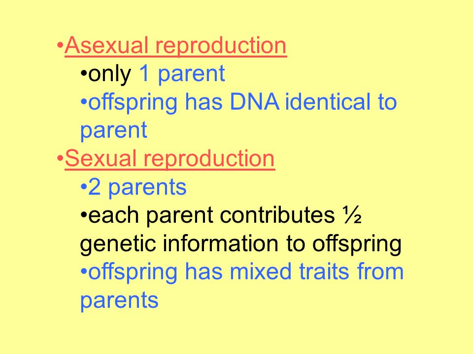 Asexual reproduction only 1 parent offspring has DNA identical to parent Sexual reproduction 2 parents each parent contributes ½ genetic information to offspring offspring has mixed traits from parents