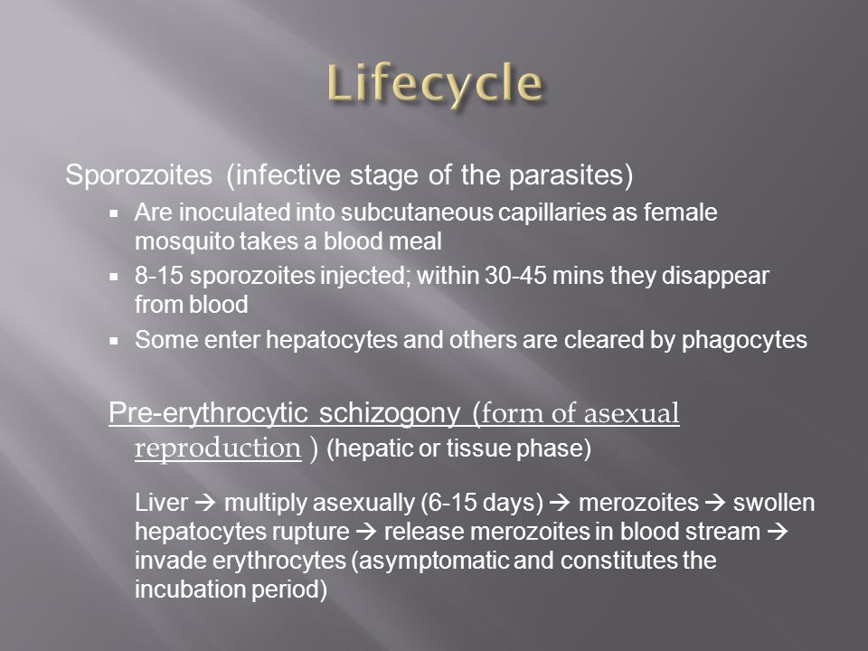Sporozoites asexual