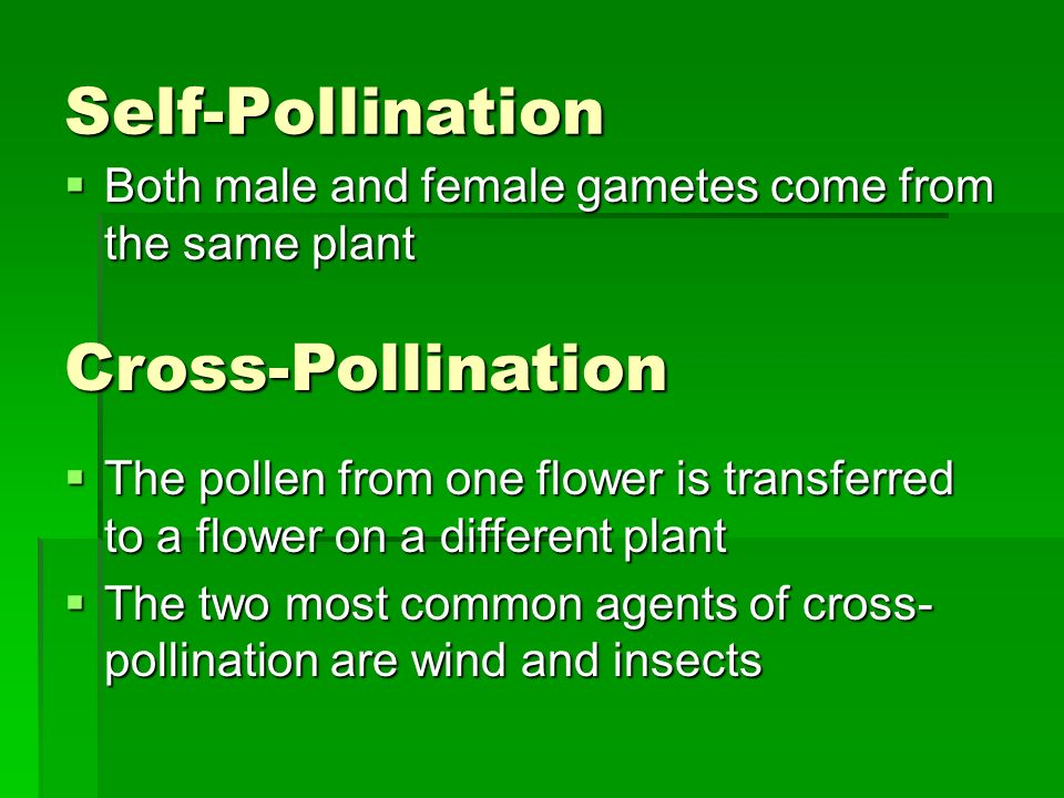 Self-Pollination  Both male and female gametes come from the same plant Cross-Pollination  The pollen from one flower is transferred to a flower on a different plant  The two most common agents of cross- pollination are wind and insects