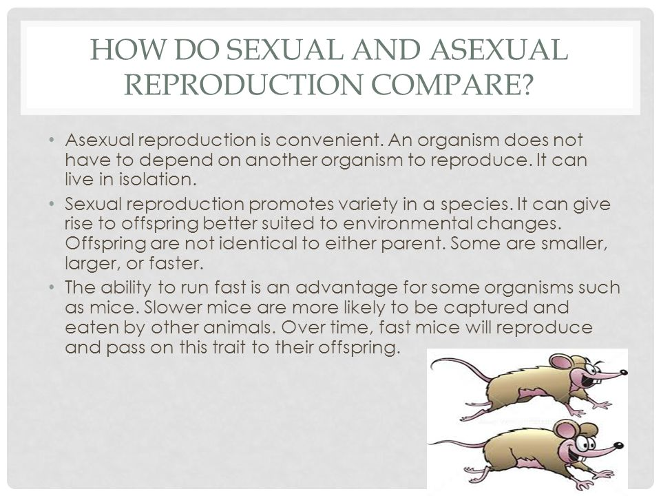 Asexual and sexual reproduction differences and similarities between judaism