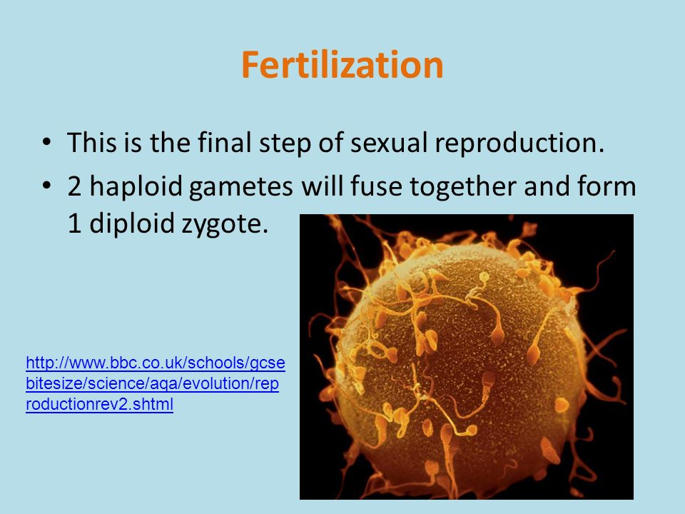 Sexual reproduction in humans bbc bitesize