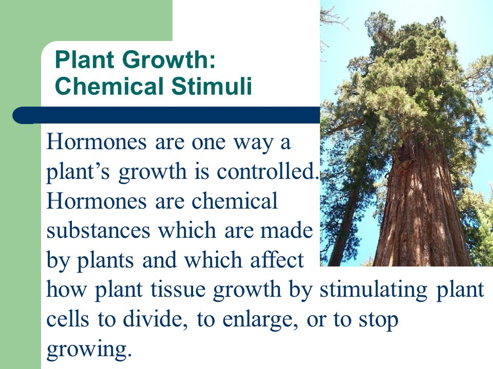 Stimuli are any changes in an organism's environment that cause a response.