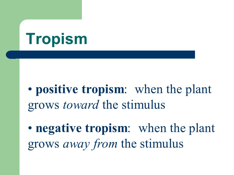 Tropism: Environmental Stimuli the growth responses of plants to their environment a plant s directional growth response to a physical stimulus the growth of plants in response to external stimuli such as light, gravity, or contact