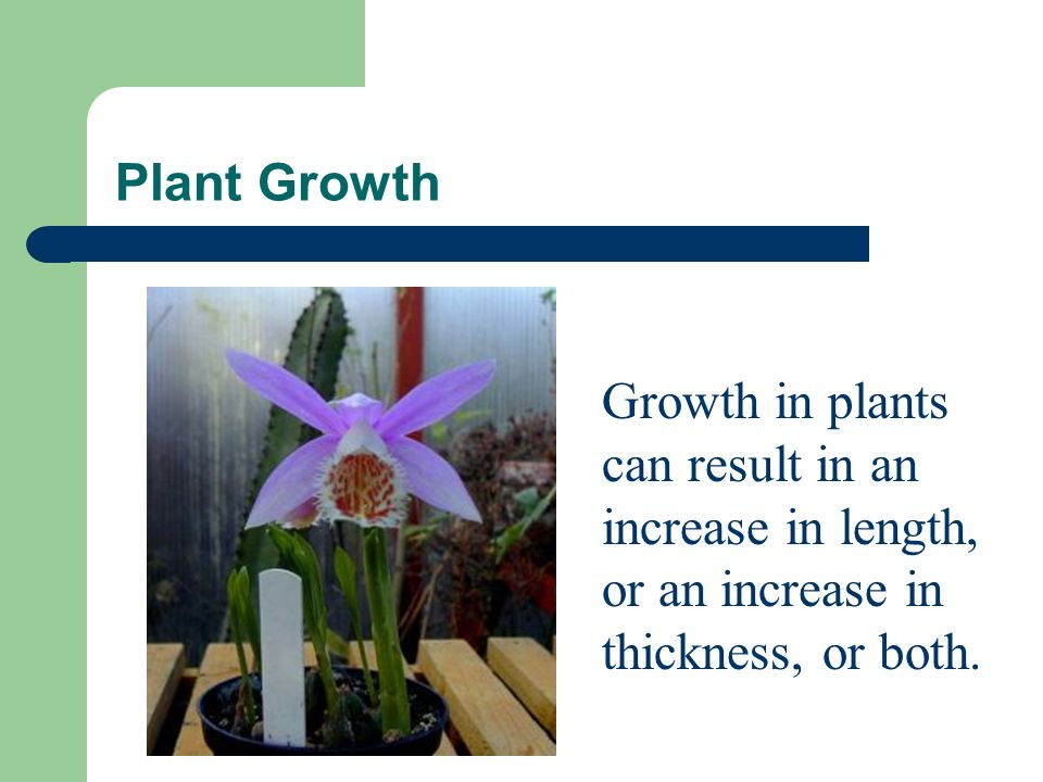 Plant Growth Plants respond to their environment by the way they grow or do not grow.
