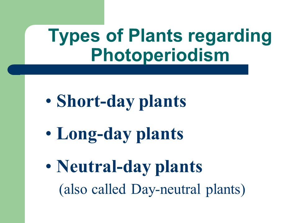Photoperiodism Some plants can accurately measure the length of light and darkness to within minutes so they will flower at precisely the right time of year.