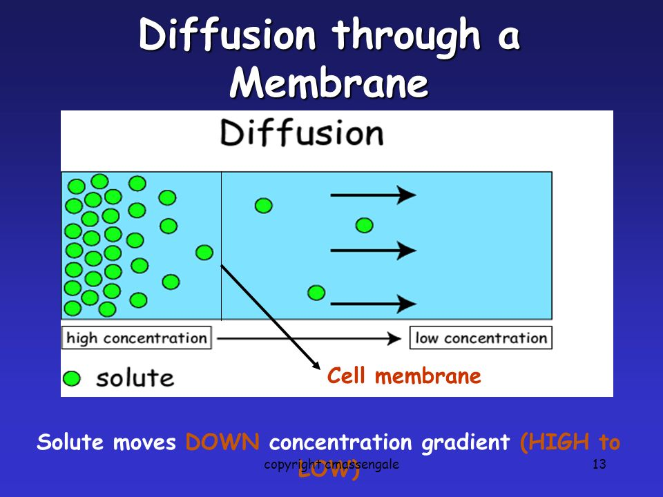 13 Diffusion through a Membrane Cell membrane Solute moves DOWN concentration gradient (HIGH to LOW) copyright cmassengale