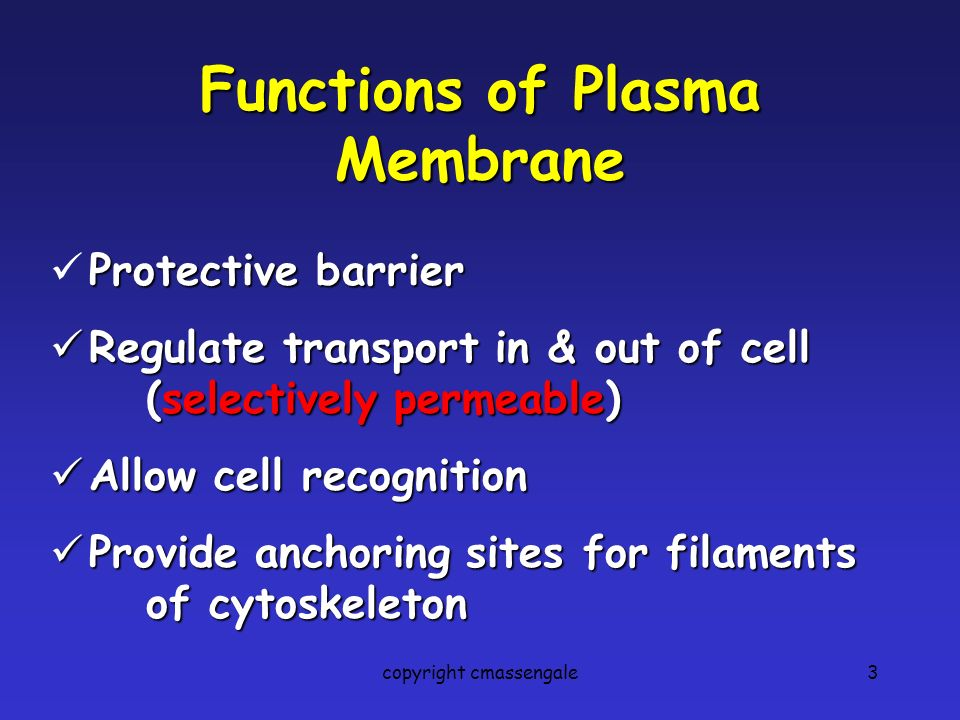 3 Functions of Plasma Membrane Protective barrier Regulate transport in & out of cell (selectively (selectively permeable) Allow cell recognition Provide anchoring sites for filaments of cytoskeleton copyright cmassengale