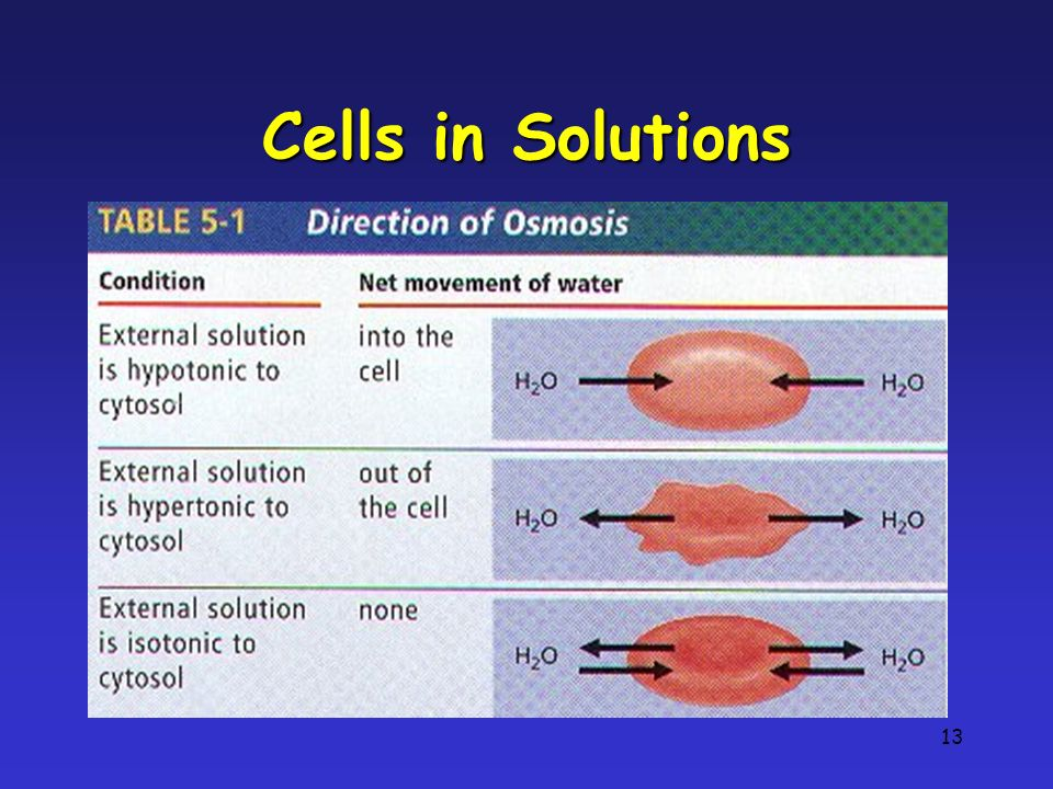 13 Cells in Solutions