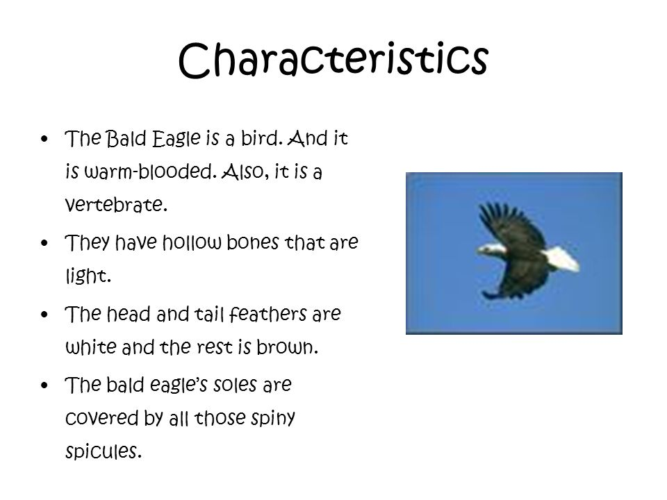 main physical and social characteristics of wolves bald eagles and humans In june of 2007, the us fish & wildlife service announced the removal of the bald eagle from the list of species protected by the endangered species act the fish and wildlife service will monitor bald eagles for a 5-year period as required by the endangered species act.