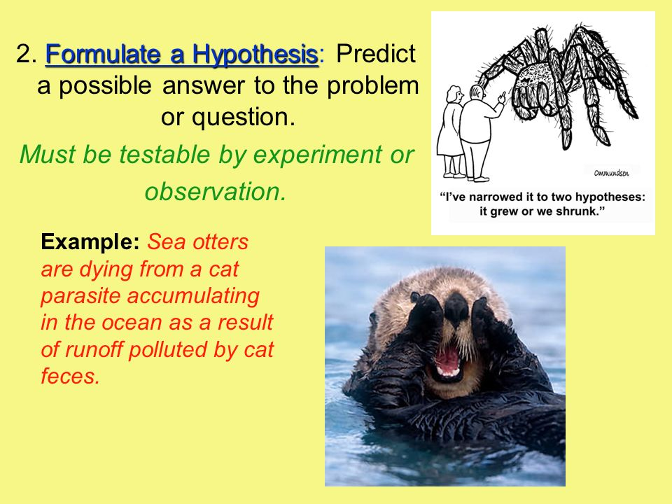 Formulate a Hypothesis 2.