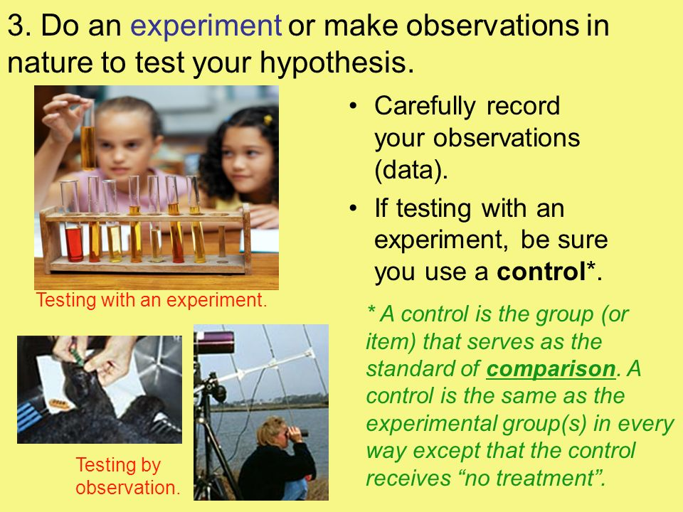 3. Do an experiment or make observations in nature to test your hypothesis.