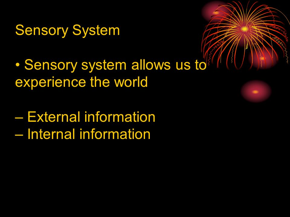 Sensory System Sensory system allows us to experience the world – External information – Internal information