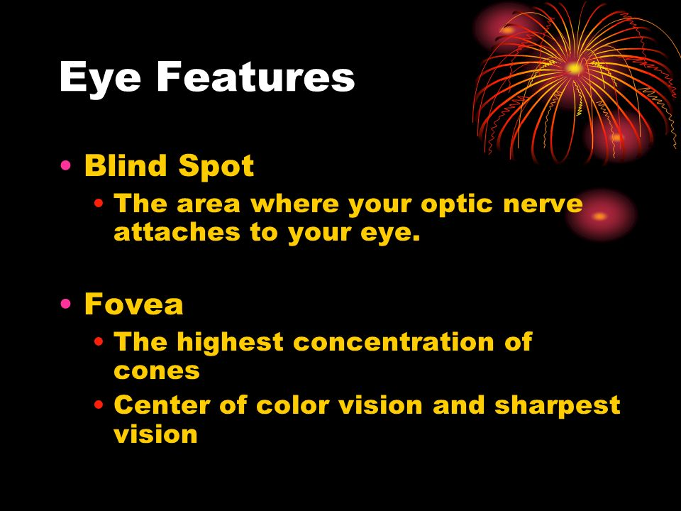 Eye Features Blind Spot The area where your optic nerve attaches to your eye.