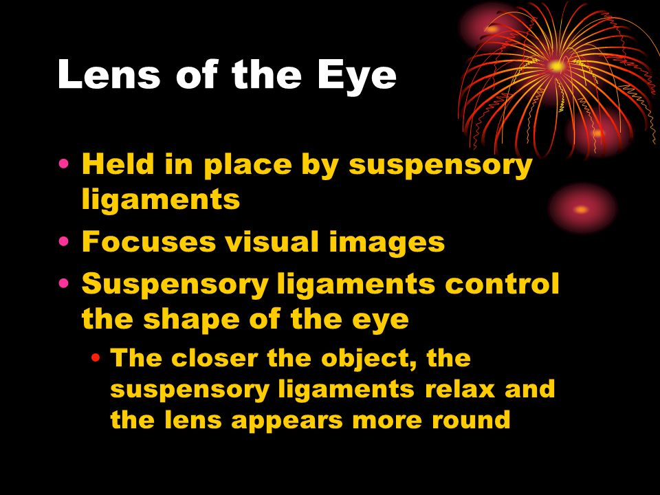 Lens of the Eye Held in place by suspensory ligaments Focuses visual images Suspensory ligaments control the shape of the eye The closer the object, the suspensory ligaments relax and the lens appears more round