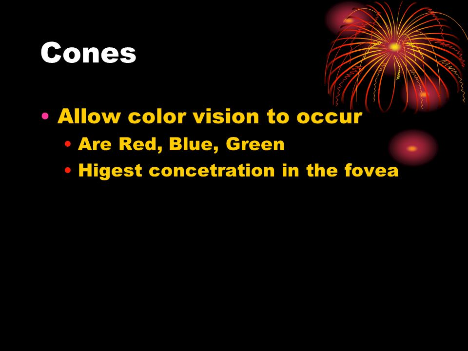 Cones Allow color vision to occur Are Red, Blue, Green Higest concetration in the fovea