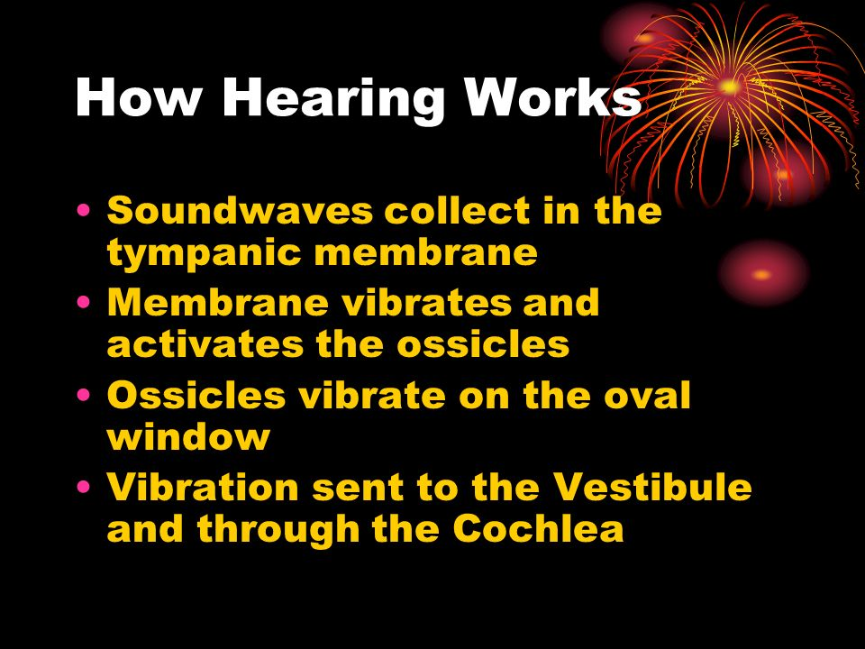 How Hearing Works Soundwaves collect in the tympanic membrane Membrane vibrates and activates the ossicles Ossicles vibrate on the oval window Vibration sent to the Vestibule and through the Cochlea