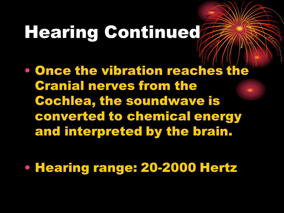 Hearing Continued Once the vibration reaches the Cranial nerves from the Cochlea, the soundwave is converted to chemical energy and interpreted by the brain.