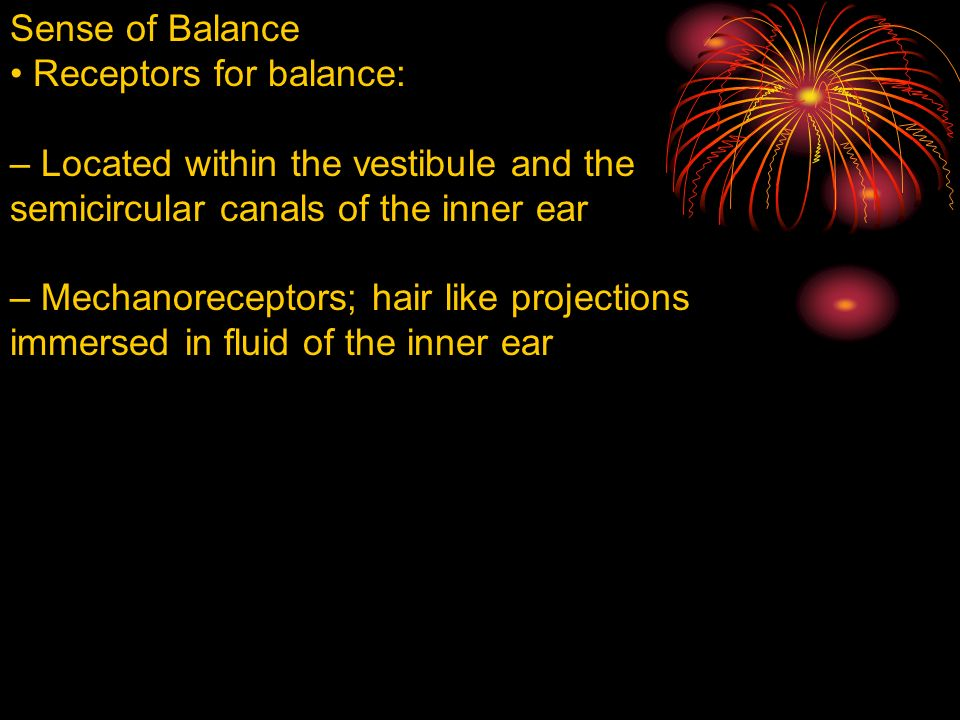 Sense of Balance Receptors for balance: – Located within the vestibule and the semicircular canals of the inner ear – Mechanoreceptors; hair like projections immersed in fluid of the inner ear