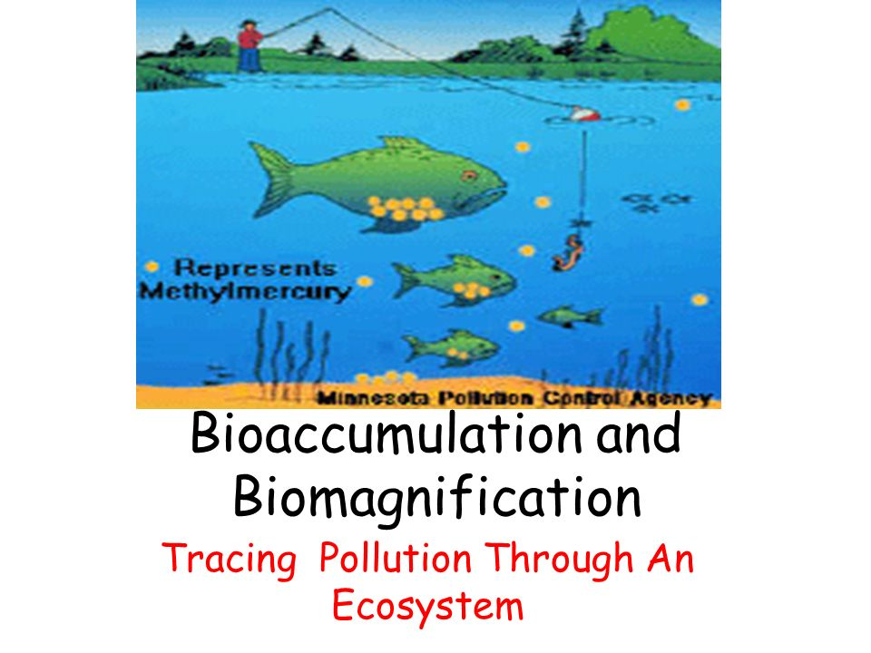 Bioaccumulation and Biomagnification Tracing Pollution Through An Ecosystem